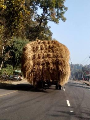 Hay wagon in the Terai, Nepal